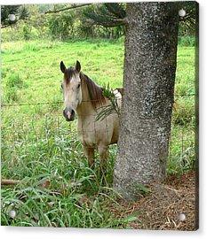 Palomino Horse Acrylic Print