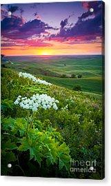 Palouse Flowers Acrylic Print