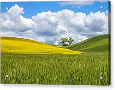 Palouse Highlights Acrylic Print