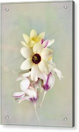 Pamela Acrylic Print by Elaine Teague