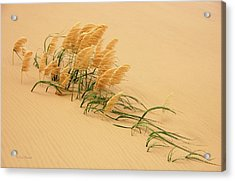 Pampas Grass In Sand Dune Acrylic Print