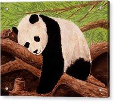 Panda Acrylic Print by Anastasiya Malakhova