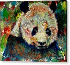 Panda Bear Acrylic Print by Anastasis  Anastasi