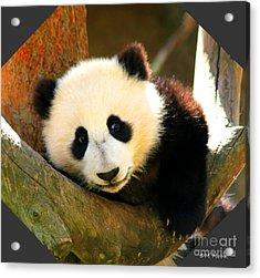 Panda Bear Baby Love Acrylic Print