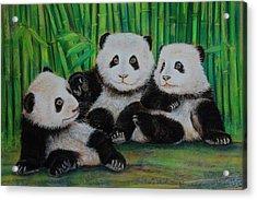 Panda Cubs Acrylic Print