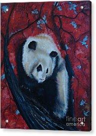Panda Acrylic Print by Donna Chaasadah