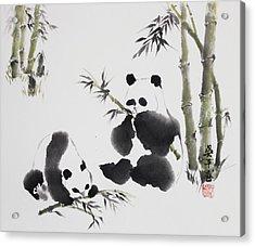 Panda  Acrylic Print
