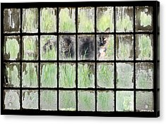 Panes Of Calico Acrylic Print