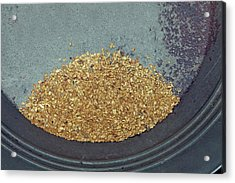 Panned Gold Acrylic Print