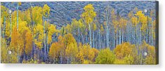 Panorama Aspens Winthrop Western Acrylic Print by Tom Norring