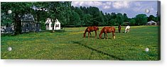 Panoramic View Of Horses Grazing Acrylic Print by Panoramic Images