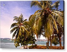 Panoramic View Of Nature With The Green Coconut Trees  Acrylic Print