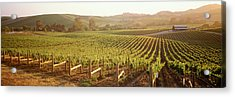 Panoramic View Of Vineyards, Carneros Acrylic Print by Panoramic Images