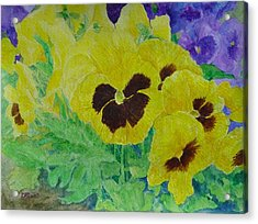 Pansies Colorful Flowers Floral Garden Art Painting Bright Yellow Pansy Original  Acrylic Print