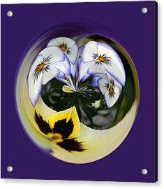 Pansy Ball Acrylic Print