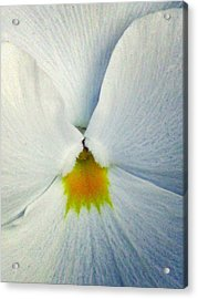 Pansy Flower 19 Acrylic Print by Pamela Critchlow