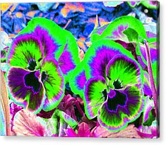 Pansy Power 60 Acrylic Print