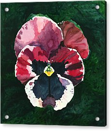 Acrylic Print featuring the painting Pansy Red by Katherine Miller