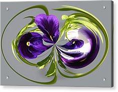 Pansy Series 801 Acrylic Print