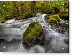 Panther Creek Falls Acrylic Print by David Gn