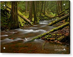 Acrylic Print featuring the photograph Panther Creek Landscape by Nick  Boren
