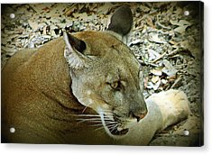 Acrylic Print featuring the photograph Panther by Debra Forand