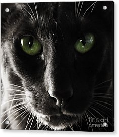 Panther Eyes Acrylic Print