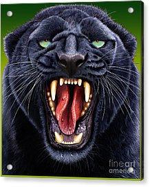 Panther Acrylic Print by Jurek Zamoyski
