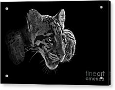 Panting Beauty Acrylic Print by Ashley Vincent