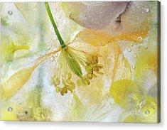 Papaver Ice Acrylic Print by Mandy Disher