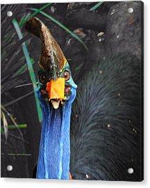 Papaya Tastes Good Acrylic Print by Debbie Cundy