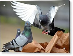 Paper Bag Pigeons 2 Acrylic Print by Fraida Gutovich