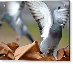 Paper Bag Pigeons Acrylic Print by Fraida Gutovich