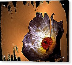 Paper Flower Acrylic Print by Irma BACKELANT GALLERIES