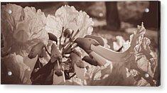 Paper Flowers - Sepia  Acrylic Print