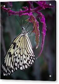 Paper Kite   Acrylic Print by Shirley Mitchell