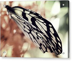 Paper Kite Butterfly Wings Acrylic Print