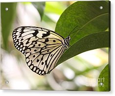 Acrylic Print featuring the photograph Paper Kite On A Leaf by Ruth Jolly