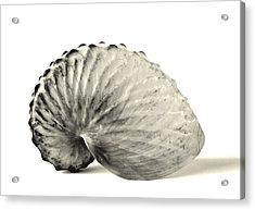 Paper Nautilus Shell Acrylic Print