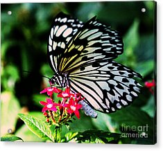 Paper White Butterfly Acrylic Print