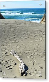 Papillon Acrylic Print by CML Brown