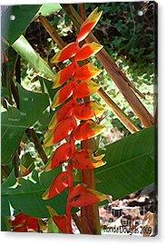 Paradise Bloom Acrylic Print