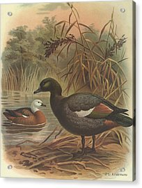 Paradise Duck Acrylic Print by Rob Dreyer
