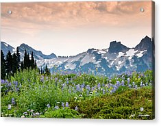 Acrylic Print featuring the photograph Paradise Meadows And The Tatoosh Range by Jeff Goulden