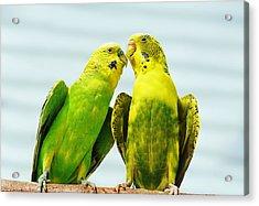 Parakeet Love Acrylic Print