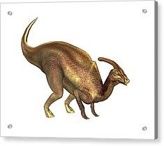 Parasaurolophus Dinosaur Acrylic Print