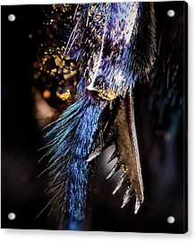 Parasitic Bee Tibial Spur Acrylic Print by Us Geological Survey