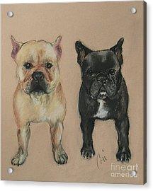 Pardon My French Acrylic Print by Cori Solomon