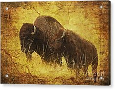 Parent And Child - American Bison Acrylic Print by Lianne Schneider
