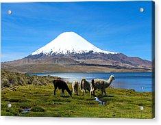 Parinacota Volcano Lake Chungara Chile Acrylic Print by Kurt Van Wagner